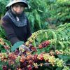 The 7th Buon Ma Thuot Coffee festival 2019 helps to bootVietnam's coffee exports