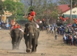 Come to Buon Don Elephant Racing 2019