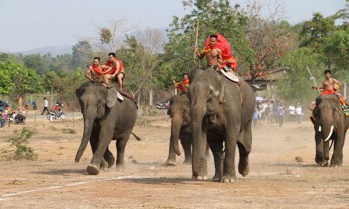 Buon Don District: Urgently prepare for the Elephant Racing and Festival of Ethnic Cultural Traditions, 2019