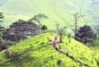 Vietnam's most beautiful trekking route suspended for Covid-19 prevention