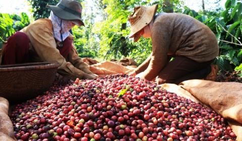 Thăm thủ phủ cà phê Tây Nguyên