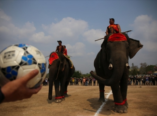 Elephants join football match at Buon Ma Thuot Coffee Festival