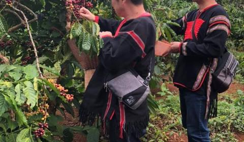 Du khách Nhật Bản trải nghiệm tour du lịch cà phê tại Khu du lịch Sinh thái Văn hóa cộng đồng KoTam