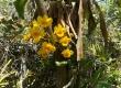 Khu bảo tồn lan rừng Troh Bư 'đốn tim' du khách với hơn 200 loại lan rừng quý hiếm