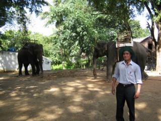 Tây Nguyên có nguy cơ hết voi
