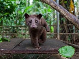 Không tổ chức đưa khách đến tham quan các điểm khai thác, mua, bán, nuôi nhốt động vật hoang dã trái phép