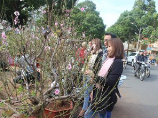 Chợ hoa Xuân Tân Sửu diễn ra từ ngày 15 đến 30 tháng Chạp
