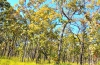 Foliage seasons comes brilliantly in deciduous broad-leaved forests