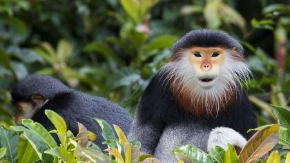 What Vietnamese Natural Reserve on the CNN list of fabulous tourist destinations?
