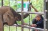 Người tự mình bảo tồn voi ở buôn Đôn