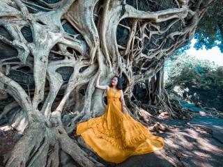 """Cây si cổ thụ có bộ rễ """"khủng"""" hút du khách tới chụp ảnh ở Đắk Lắk"""